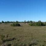 Öland - Alvaret mit Feldbegrenzung bei Skarba Alby