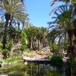 Elche - Kakteen im Jardin Huerto Del Cura