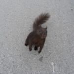der kleine Kerl stand plötzlich vor mir