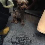 Knuffi, der Reisehund