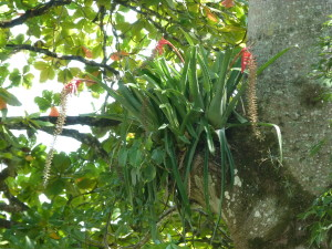 Palenque - Epiphyten  - Pflanzen ohne Wurzeln, die von ihren Wirten leben
